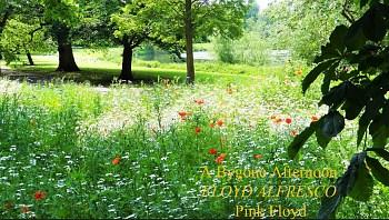 A Bygone Afternoon: Floyd Alfresco playlist
